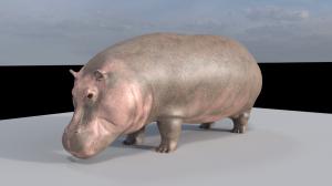 Hippo (Single)
